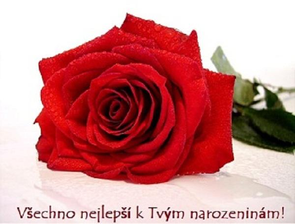 růže k narozeninám Pohlednice k narozeninám   růže růže k narozeninám