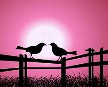 Svatební přáníčko dva ptáčci